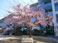 Nakayama31