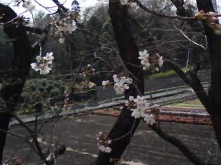 のどかな春です…