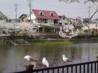 春の景色の中で…